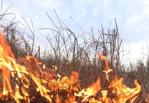 Картинки по запросу пожары травы