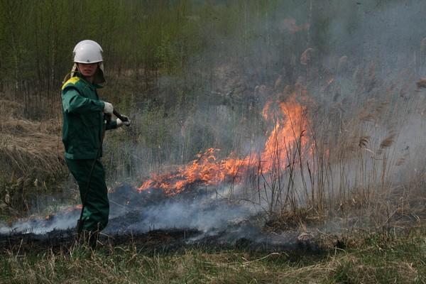 агентство лесного хозяйства красноярского края Кроссовер пробегом